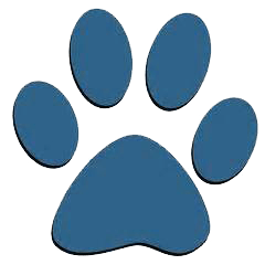 Sheffield  Dog Walking | Pawsitive Walks